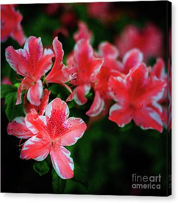 Canvas Print - Life Is A Circus At The Azalea Festival by Tamyra Ayles