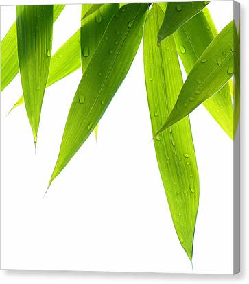 Life Is Green Canvas Print by Philippe Sainte-Laudy
