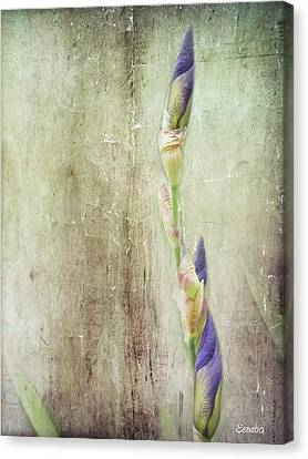 Life Of A Bud Canvas Print by Eena Bo