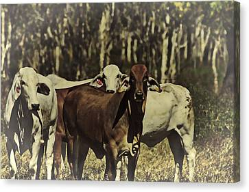 Life On The Farm V3 Canvas Print by Douglas Barnard