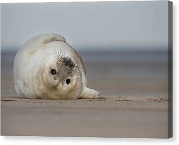 Life's A Beach Canvas Print by Andy Astbury