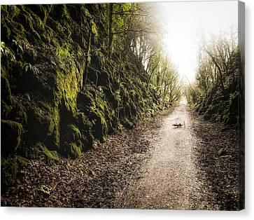 Life's Path Canvas Print
