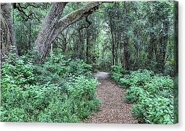 Jogging Canvas Print - Life's Pathways by JC Findley