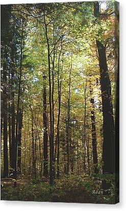 Light Among The Trees Vertical Canvas Print by Felipe Adan Lerma