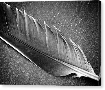 Canvas Print featuring the photograph Light As A Feather by Karen Stahlros