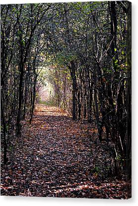 Light At The End Of The Path Canvas Print