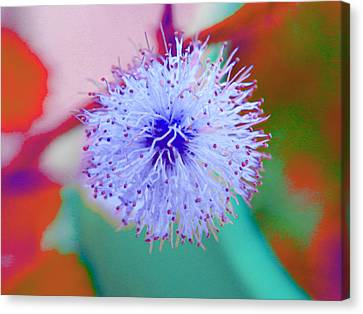 Light Blue Puff Explosion Canvas Print