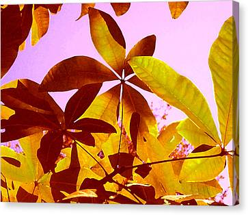 Light Coming Through Tree Leaves 1 Canvas Print by Amy Vangsgard
