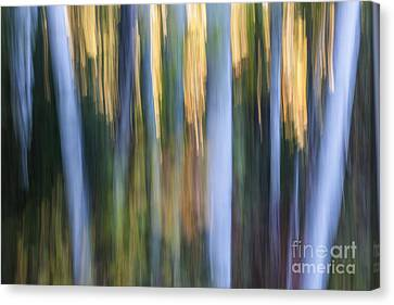 Light In Evening Forest Canvas Print