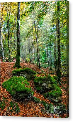 Light In The Forest Canvas Print by Adrian Evans