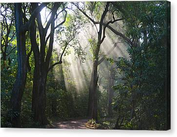 Light In The Forest Canvas Print by Eyal Bartov