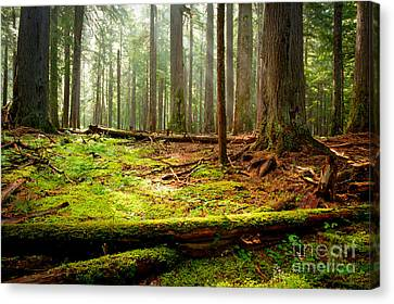 Light In The Forest Canvas Print by Idaho Scenic Images Linda Lantzy