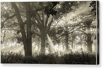 Sun Rays Canvas Print - Light In The Forest by Judith Barath