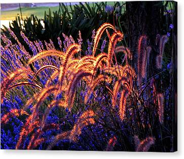 Light Is Good Canvas Print by DEBRON Art