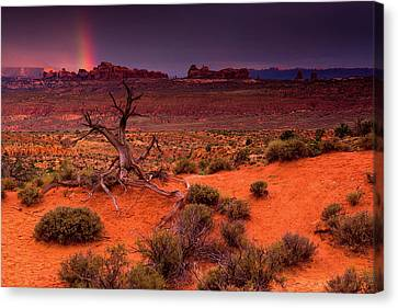 Light Of The Desert Canvas Print