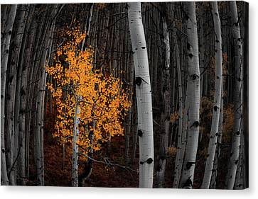 Light Of The Forest Canvas Print by Darren White