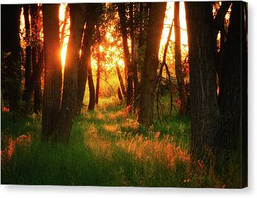 Canvas Print featuring the photograph Light Of The Forest II by John De Bord