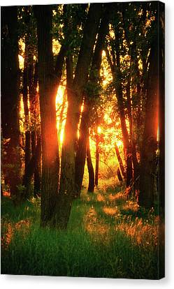 Canvas Print featuring the photograph Light Of The Forest by John De Bord