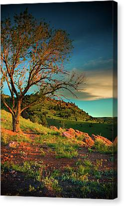 Canvas Print featuring the photograph Light Of The Hillside by John De Bord