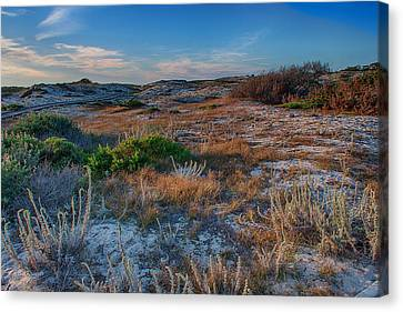Light On The Dunes Canvas Print by Bill Roberts