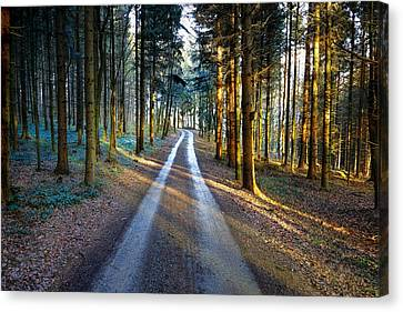 Light Path Crossing In The Woods Canvas Print