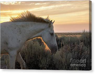 Light Shining Through Canvas Print by Nicole Markmann Nelson
