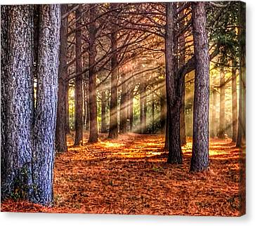 Light Thru The Trees Canvas Print by Sumoflam Photography