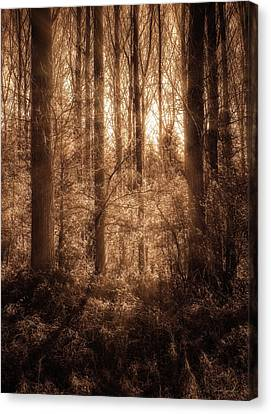 Light Trough The Forest Canvas Print by Wim Lanclus