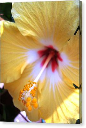 Canvas Print featuring the photograph Light Yellow Hybiscus by Laura  Grisham