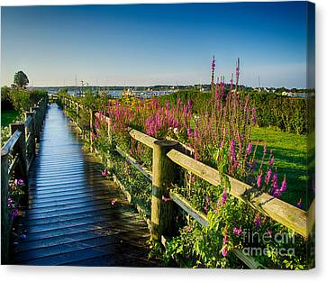 Lighthouse Path Canvas Print by Mark Miller