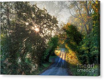Lighting The Way  Canvas Print by Larry Braun