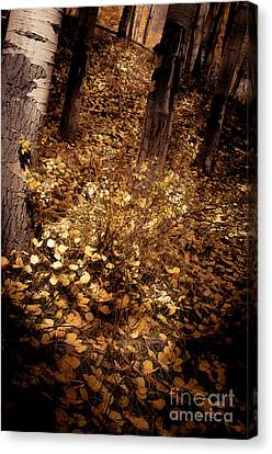 Canvas Print featuring the photograph Lighting The Way by The Forests Edge Photography - Diane Sandoval