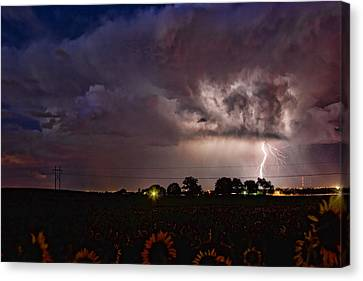 Lightning Stormy Weather Of Sunflowers Canvas Print by James BO  Insogna