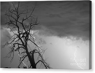 The Lightning Man Canvas Print - Lightning Tree Silhouette 38 Black And White by James BO  Insogna
