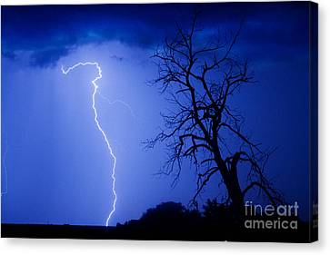 Lightning Tree Silhouette Canvas Print by James BO  Insogna