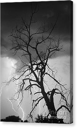 Lightning Tree Silhouette Portrait Bw Canvas Print by James BO  Insogna