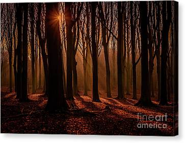 Lights And Shadows Canvas Print