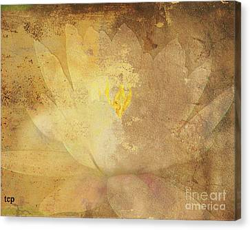 Canvas Print featuring the photograph Lights On Lily by Traci Cottingham