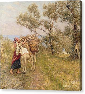 Ligurian Olives Canvas Print by Henry Herbert La Thangue