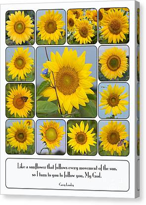 Like A Sunflower Canvas Print by Bonnie Barry