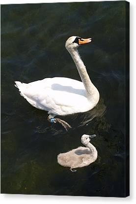 Canvas Print featuring the photograph Like Father Like Son by Michael Canning