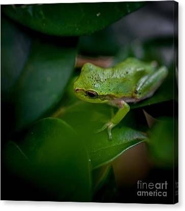Lil Peeper Canvas Print by DeWayne Beard