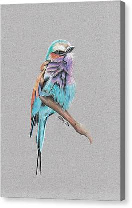 Canvas Print featuring the drawing Lilac Breasted Roller by Gary Stamp