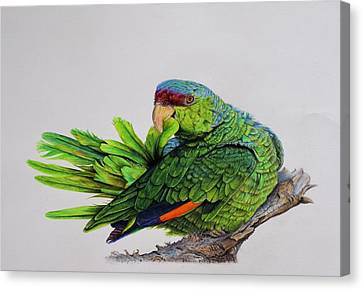 Lilac Crowned Amazon Parrot Canvas Print