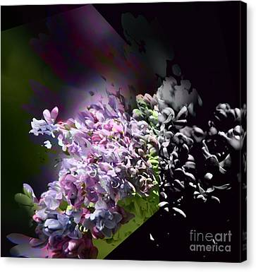 Lilac Canvas Print by Elaine Hunter