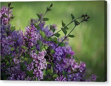 Lilac Enchantment Canvas Print by Karen Casey-Smith