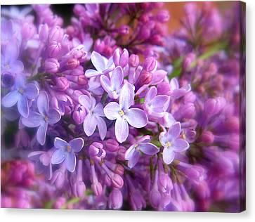 Lilac Canvas Print by Jessica Jenney