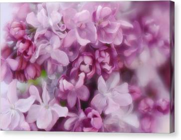 Canvas Print featuring the photograph Lilac - Lavender by Diane Alexander