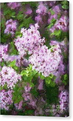 Lilac Lovelies Canvas Print by A New Focus Photography