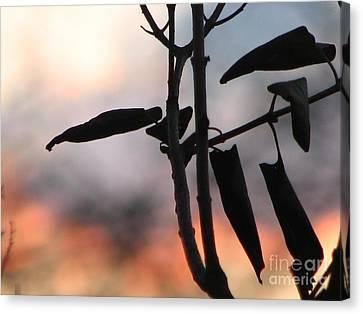 Lilac Sunset Canvas Print
